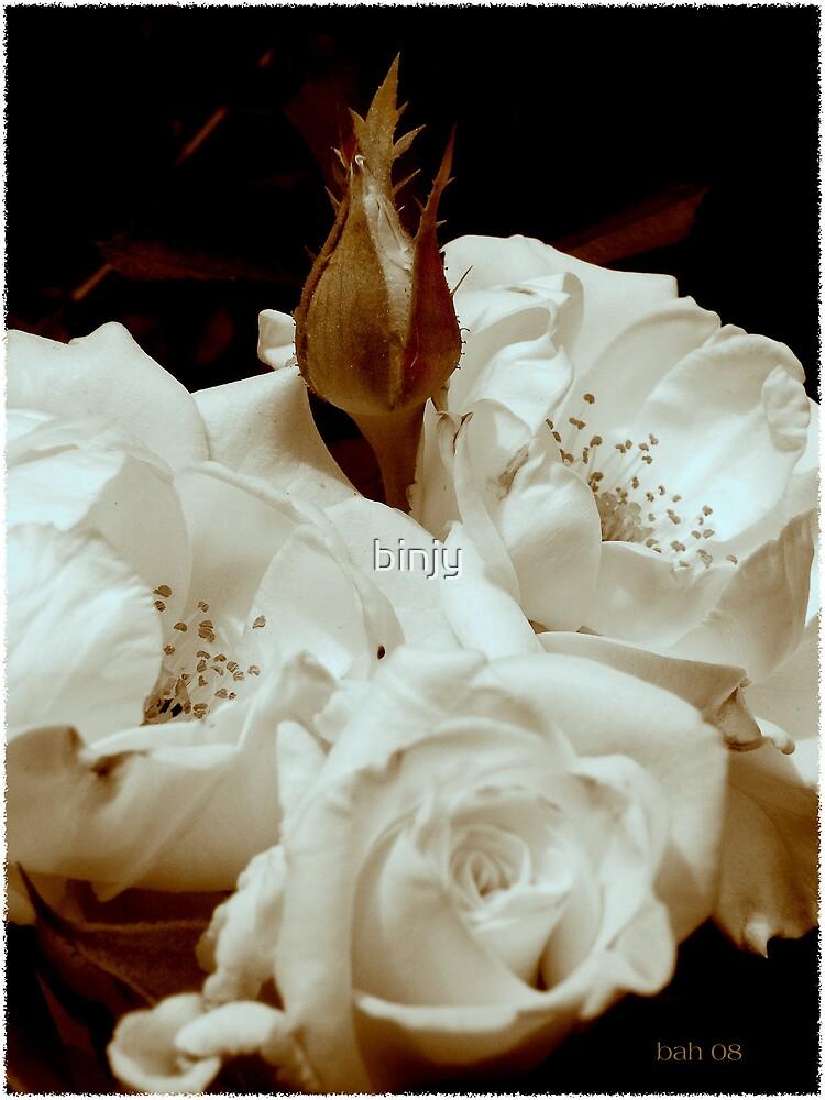 Sepia Roses by binjy