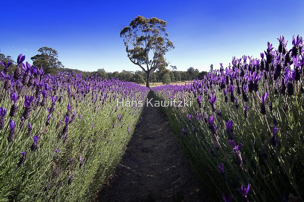1221 Lavender and Tree by Hans Kawitzki