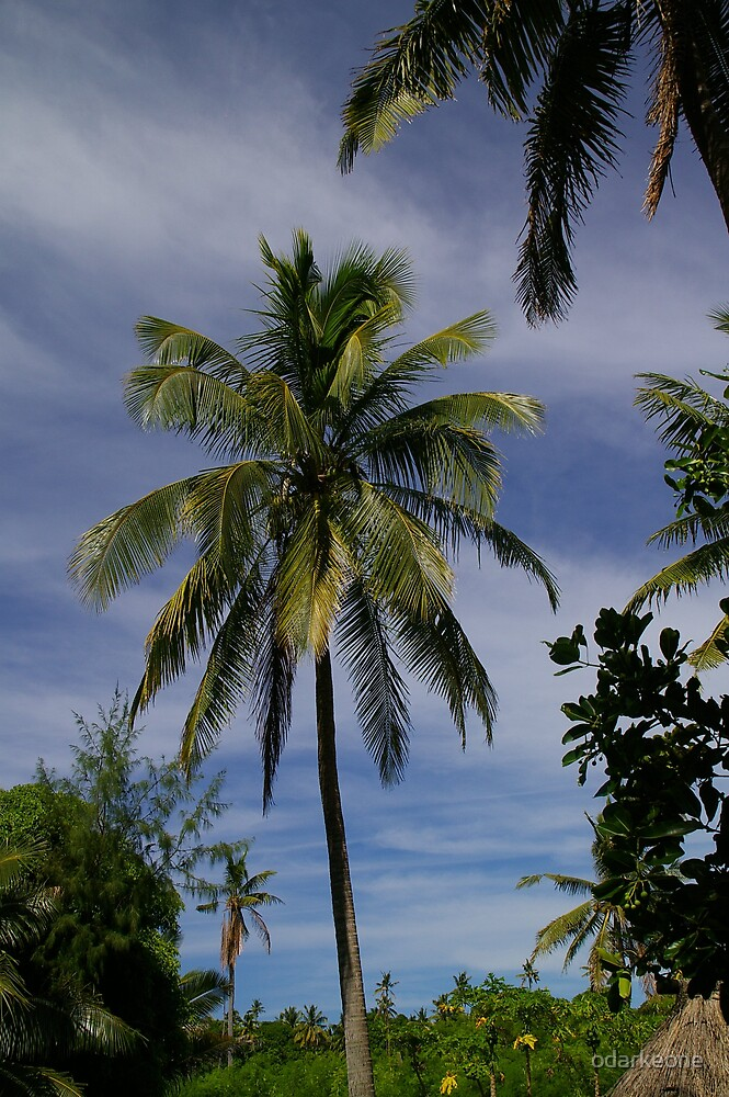 Palm Tree by odarkeone