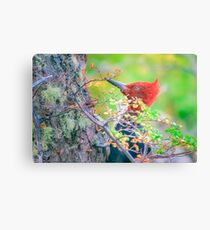 Woodpecker at Forest Pecking Tree, Patagonia, Argentina Canvas Print