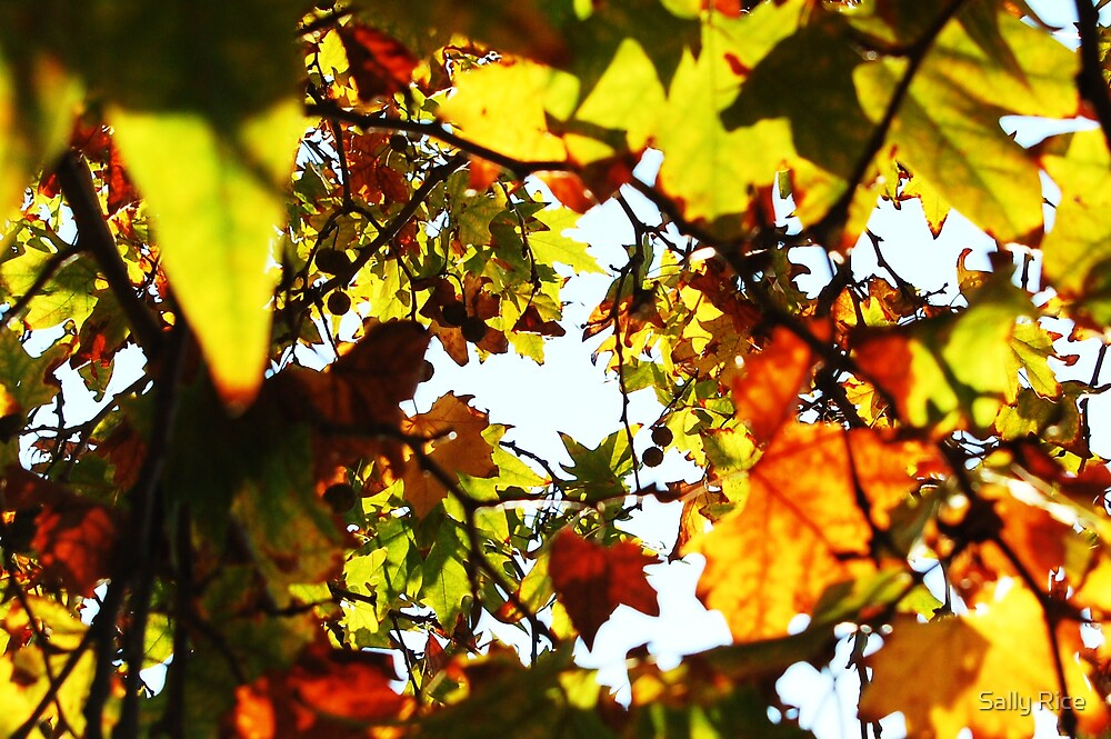 Autumn Leaves by Sally Rice