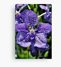 Orchid - Purple Canvas Print