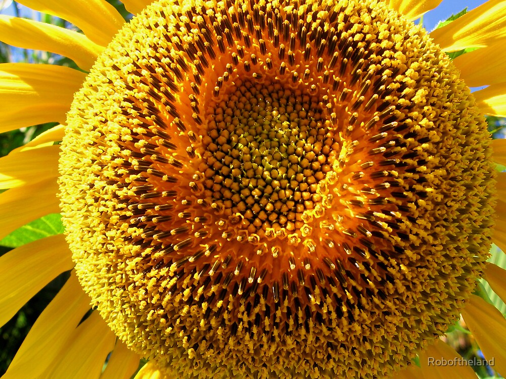 Fat Sunflower by Roboftheland
