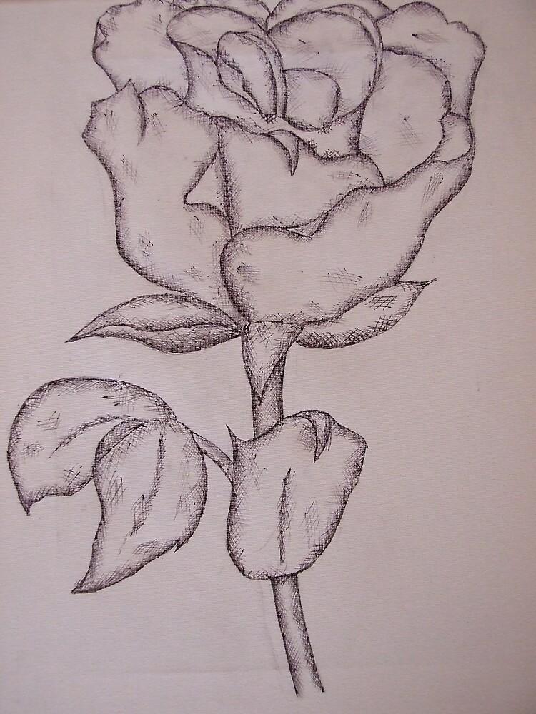 White rose by Gemma27