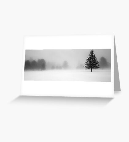 Bridgton Highlands - Trees In Fog and Snow Greeting Card
