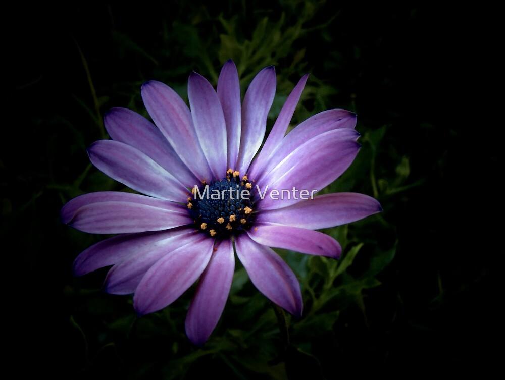 Starlight by Martie Venter