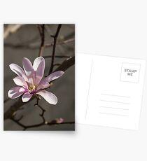 Sunny Pink Magnolia Blossom Postcards