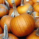 Pumpkins by karink57