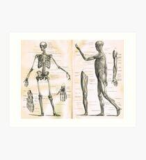 19th century anatomy illustration parts of  a human skeleton Art Print