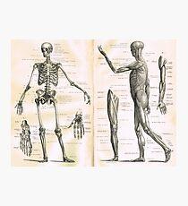 19th century anatomy illustration parts of  a human skeleton Photographic Print