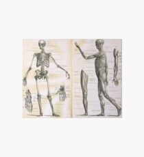 19th century anatomy illustration parts of  a human skeleton Art Board