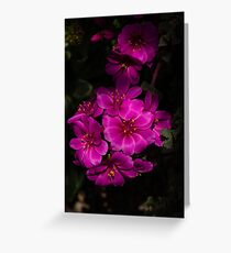 A Vivid Succulent Bouquet in Bold Pink and Fuchsia Greeting Card