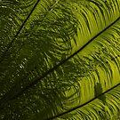Tropical Green Curves and Diagonals - a Vertical View by Georgia Mizuleva