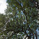 The Intricate Natural Canopy - Vertical by Georgia Mizuleva