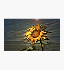 Your Daily Sunshine Photographic Print