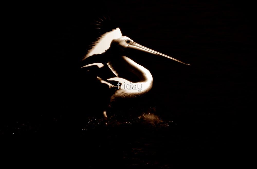 pelican by Amagoia  Akarregi