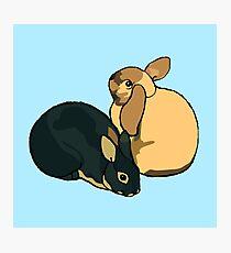 Rabbits Photographic Print