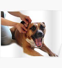STAFFORDSHIRE TERRIER DOG EAR MASSAGE  Poster