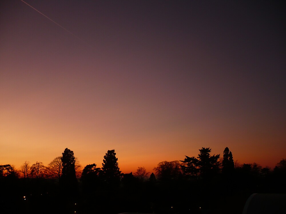 Sunset treeline by Caroline Cage