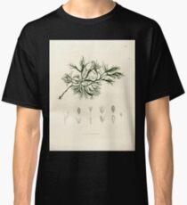 Nova genera et species plantarum V1 V3 Plates Karl Friedrich Philipp von Martius 1834 004 Lacis fucisdes Classic T-Shirt