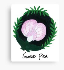 Sweet Pea Botanical Painting Canvas Print
