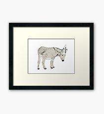 Dumb Donkey Framed Print