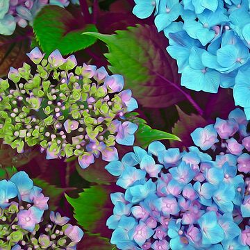 Hydrangea Pink and Blue by LidkaSchuch