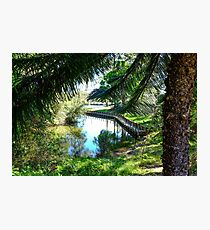 Forster Lake Photographic Print