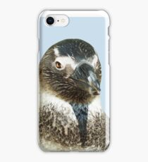 penguin close-up head  isolated object iPhone Case/Skin