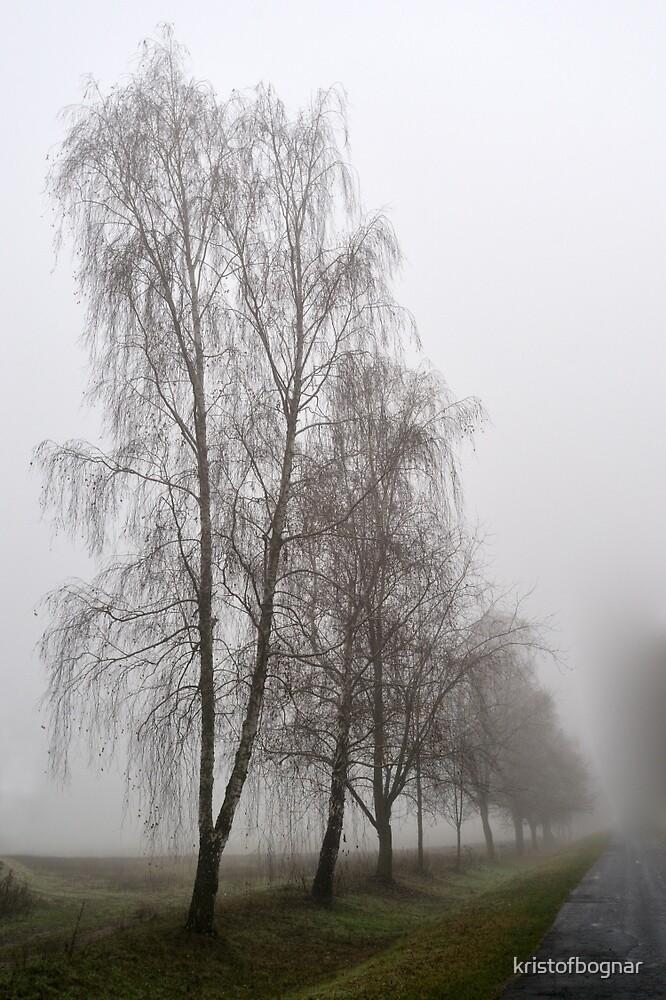 Fog by kristofbognar