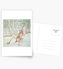 Australian Kangaroos Postcards