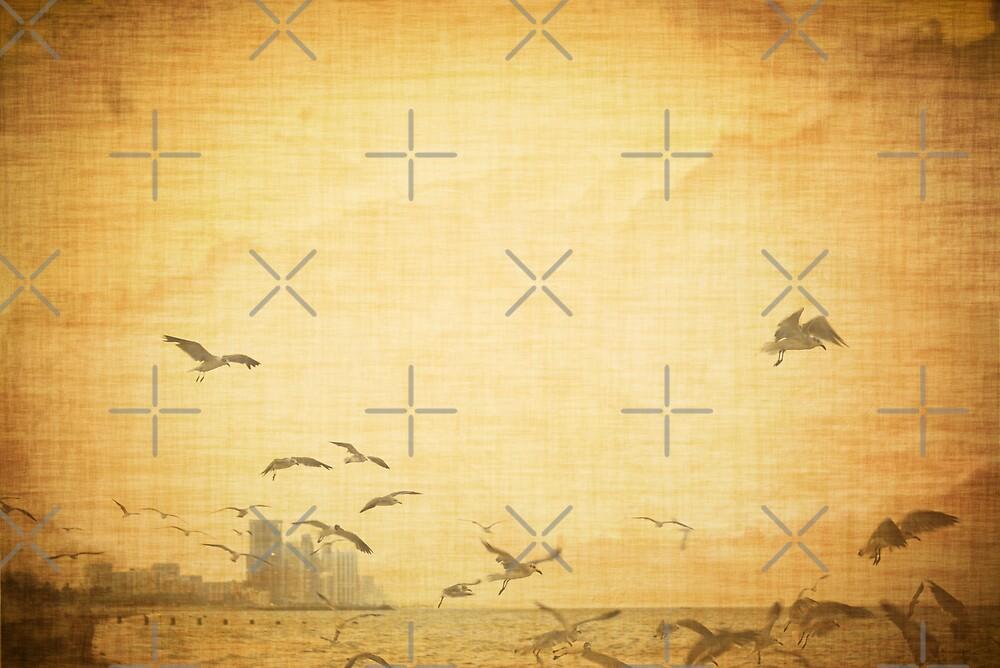 Birds by wmiami