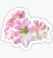 Springy Amaryllis Sticker