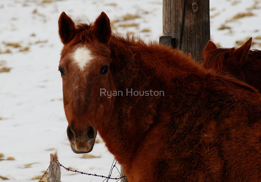 Star by Ryan Houston