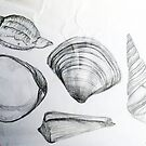 Sea Shells 4 by Margo Humphries by Margo Humphries