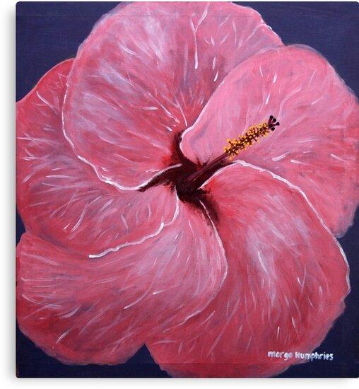Hibiscus Flower by Margo Humphries