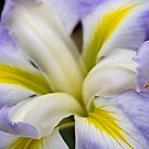 Japanische Iris - Ozeannebel von Celeste Mookherjee