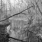 Over the Creek by Bill Wetmore
