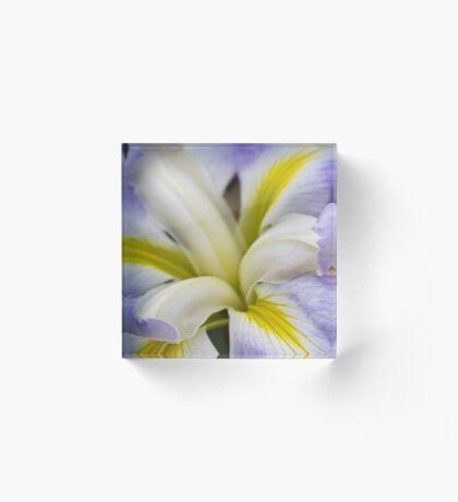 Japanische Iris - Ozeannebel Acrylblock