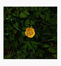 Buttercup Drop Photographic Print