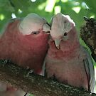 A mother's love by Denzil
