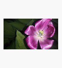 charming purple flower  Photographic Print