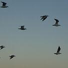Flight by Luke Jones