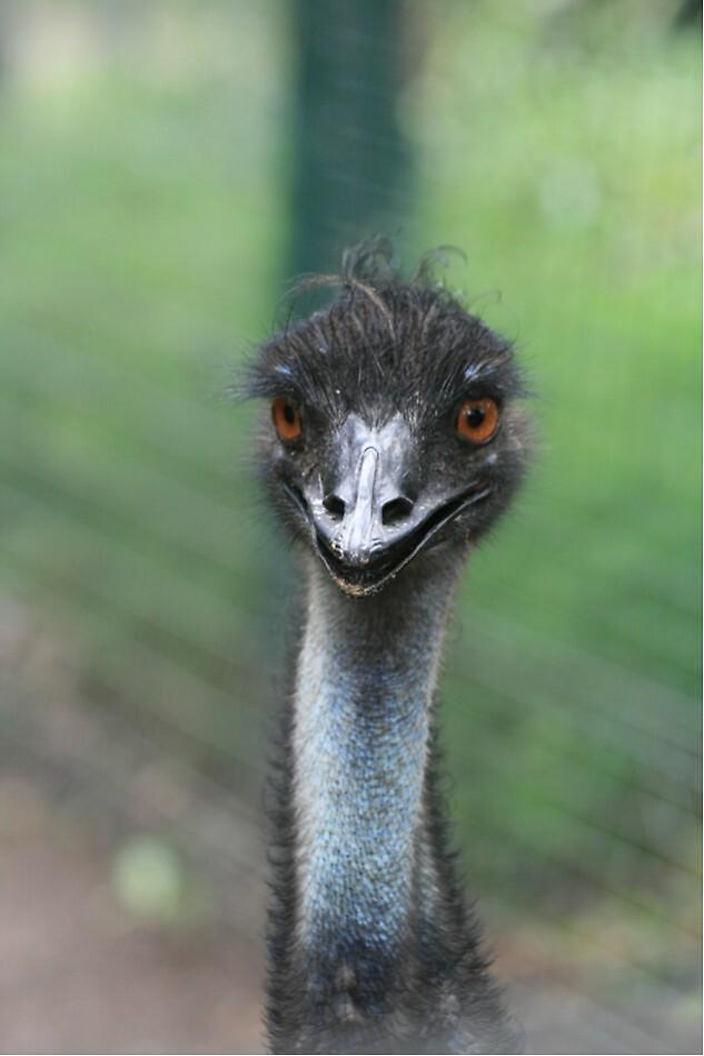 Emu by JudyMac