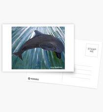 Dolphin Postcards