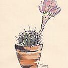 Echinopsis oxygona cactus by Maree Clarkson
