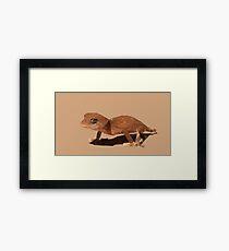 Northern knob tailed gecko Framed Print