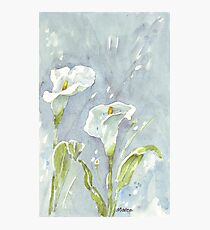 Arum lilies (and fireflies) at night Photographic Print