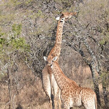 Giraffe Mama and Calf by Sauropod8
