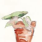 Begonia - foolproof? by Maree Clarkson